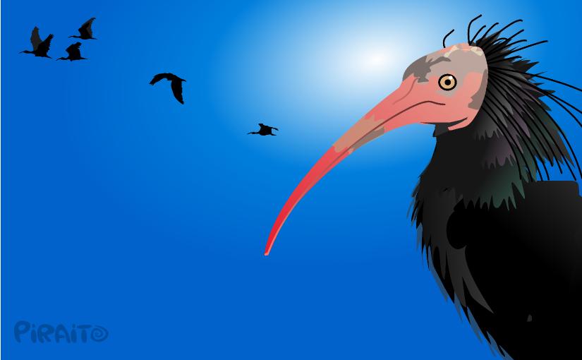 Sobre la camiseta Banda ibis, habitantes de La Janda.